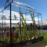 Terrario con plantas carnívoras