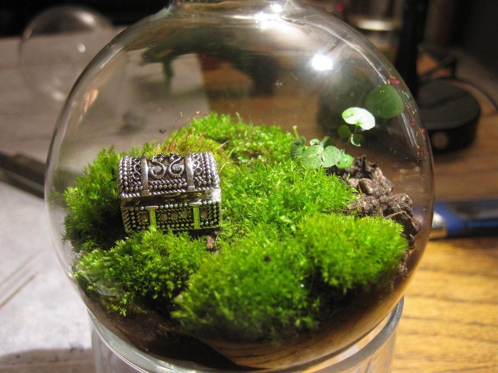 Terrario en bola de cristal