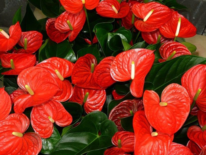 Protege del frío tus plantas de interior