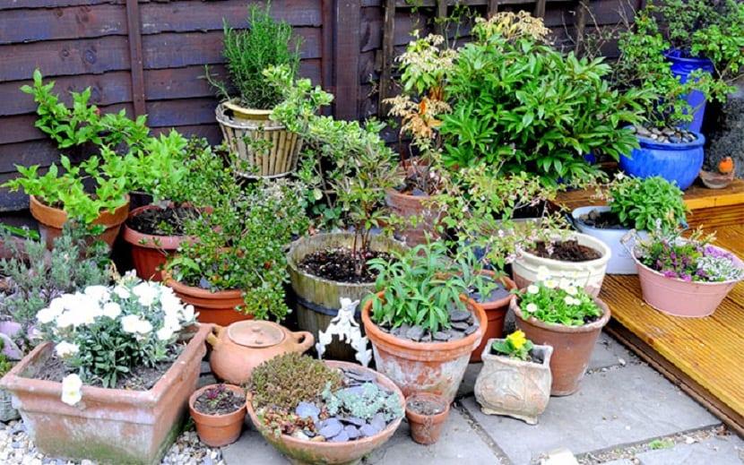 utiliza una maceta para tus plantas
