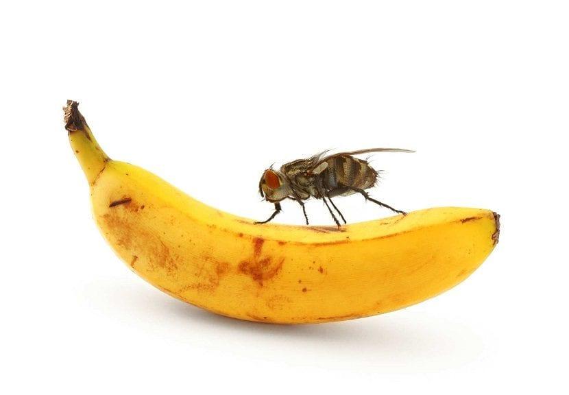 Prevén la mosca de la fruta con vinagre