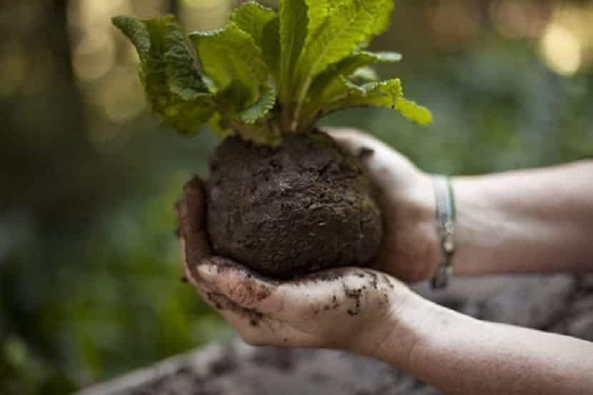 como cuidar tus plantas