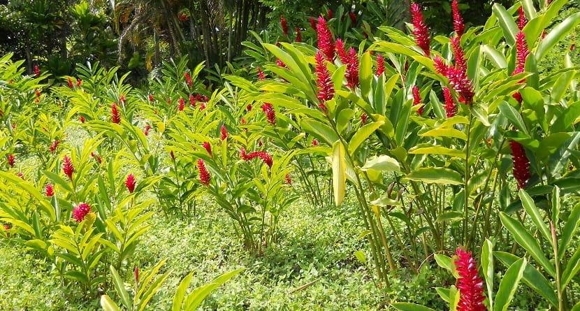 flores autóctonas frente a las alóctonas