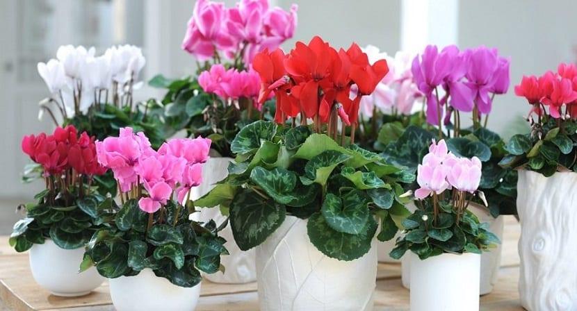 cuidados id neos y algunos tipos de flores de interior