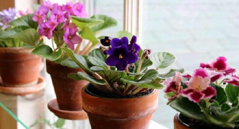 flores de interiores