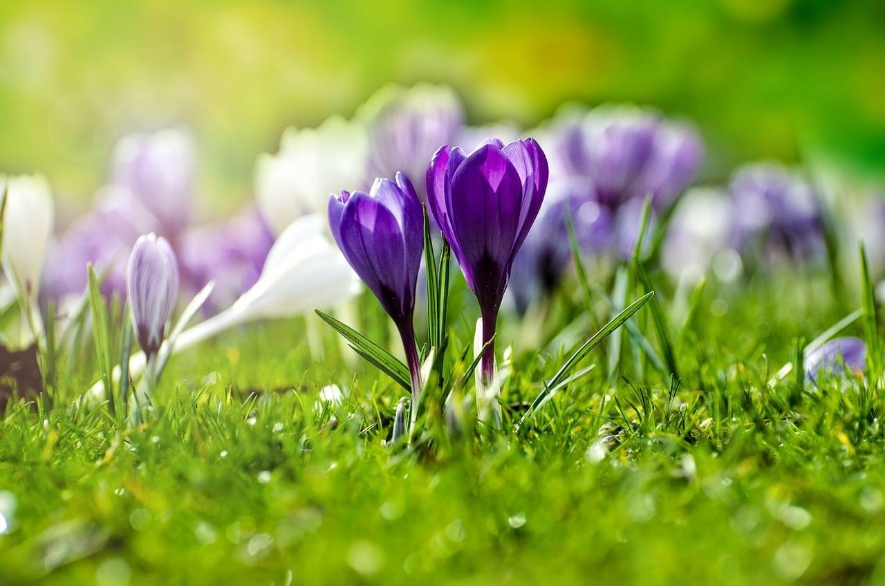 Flores lilas en el campo