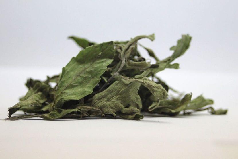 Hojas secas de Stevia rebaudiana