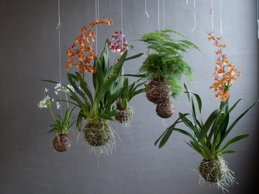 jardin con Kokedamas