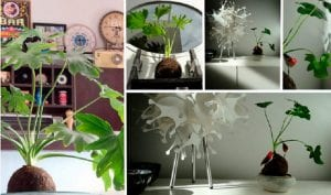 decora tu casa con plantas sin macetas