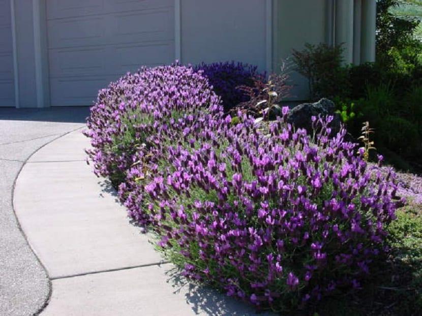 7 plantas de exterior que no sabias que florecen todo el a o - Plantas de jardin exterior ...