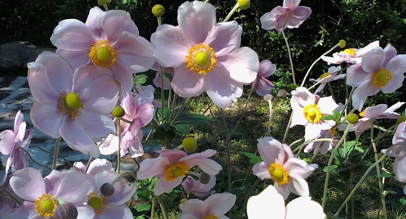 las plantas autóctonas son buenas para el jardín