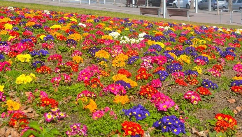 Qu plantar en cada estaci n del a o - Plantas perennes exterior ...