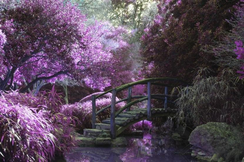 Rincón de árboles en un jardín