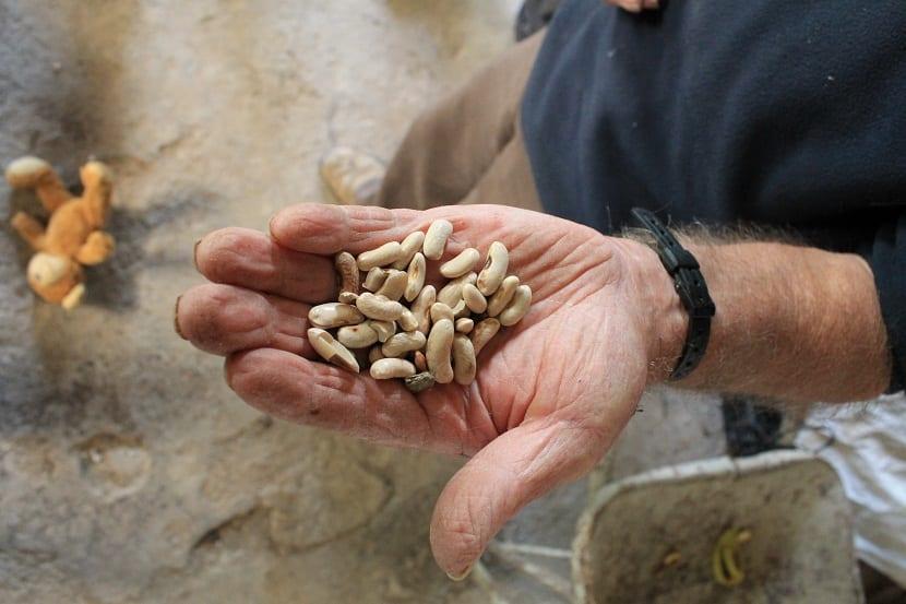 diferencia semillas