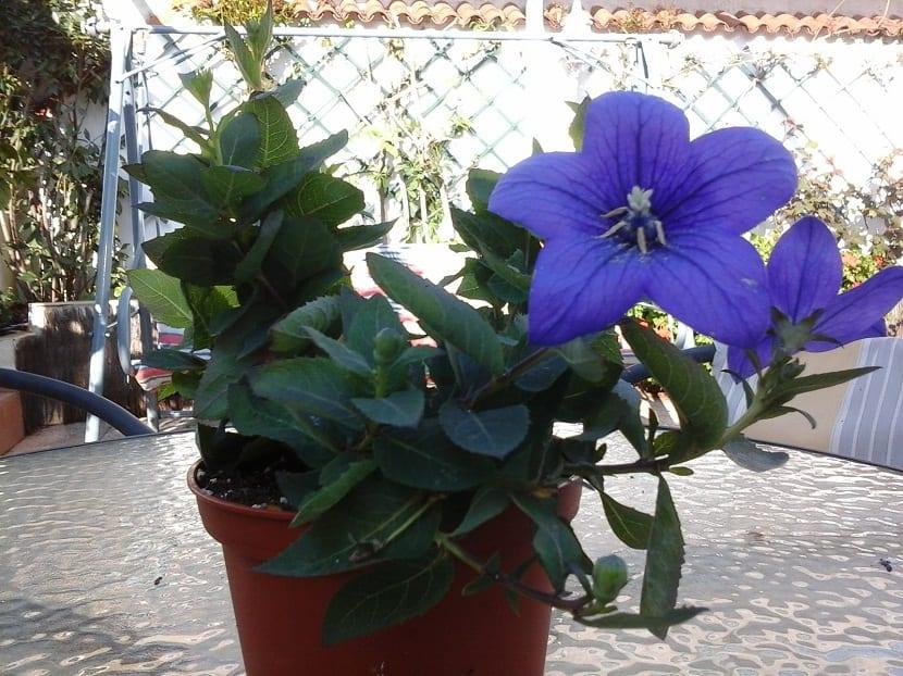 Flores que surgen en Mayo