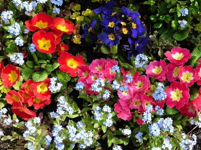 variedad de flores que se pueden plantar