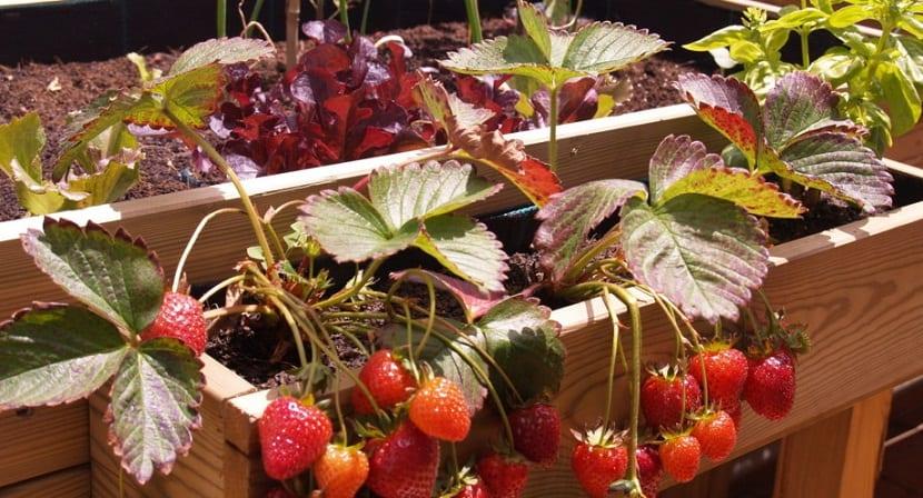 Conoce cuales son los refranes y las plantas que florecen for Plantas hortalizas ejemplos