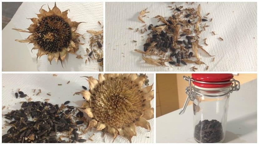 almacenar semillas