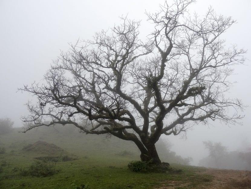 Viejo árbol caduco sin hojas en invierno