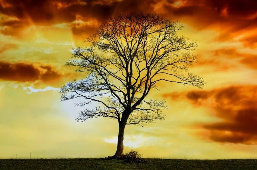 Árbol caduco sin hojas