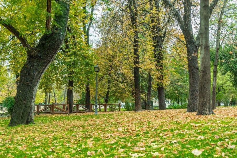 Bosque de árboles sano, ayuda a mantener el planeta vivo