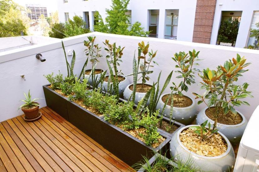 Azotea con plantas en maceta