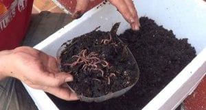 compostera de lombrices