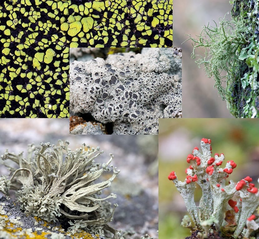 Crecimiento y desarrollo de las algas, los líquenes y el musgo