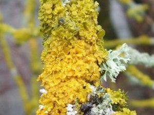 las algas, musgo y liquenes pueden ser beneficiosos