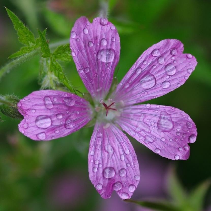 Flor con agua
