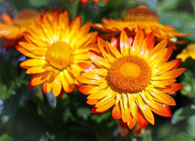 Flor de papel en el jardín