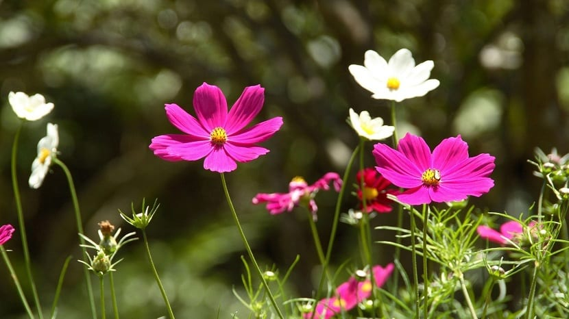 plantas marzo