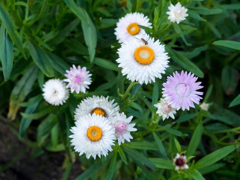 Flores de papel en el jardín