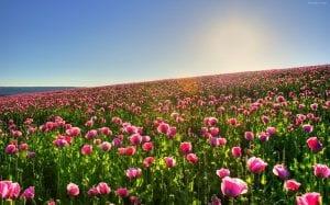 Las Plantas que florecen en el mes de Marzo