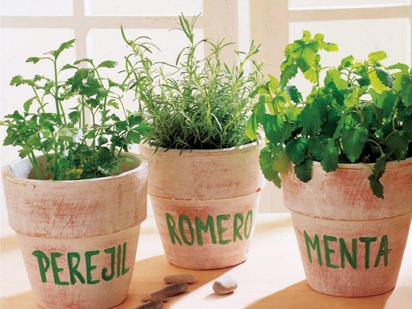 Las plantas aromáticas y terapéuticas