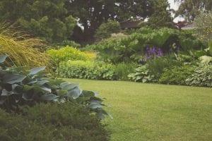 Jardín con césped