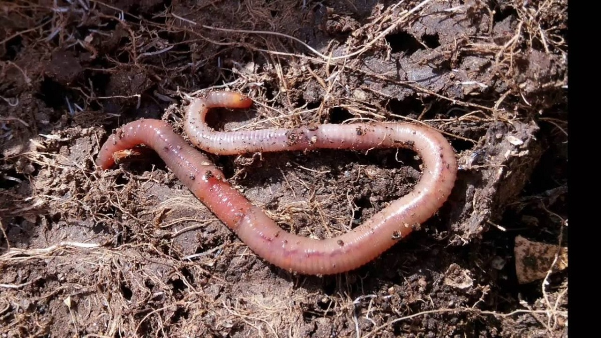 El suelo es necesario que esté bien oxigenado para las plantas