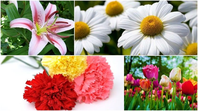 Otro tipo de flores
