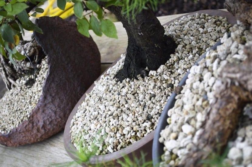uso de la perlita para jardinería