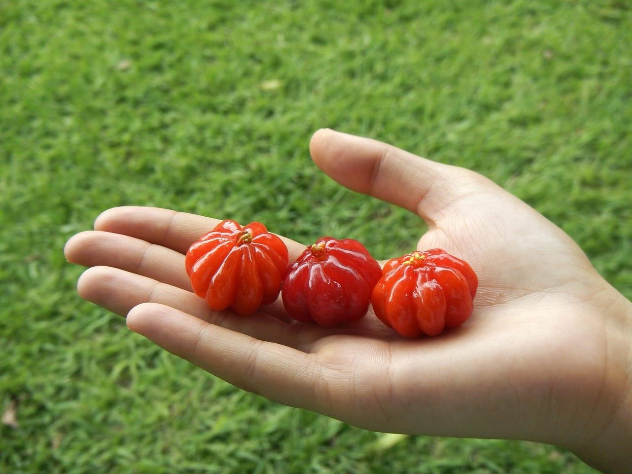 Pitangas, frutas comestibles
