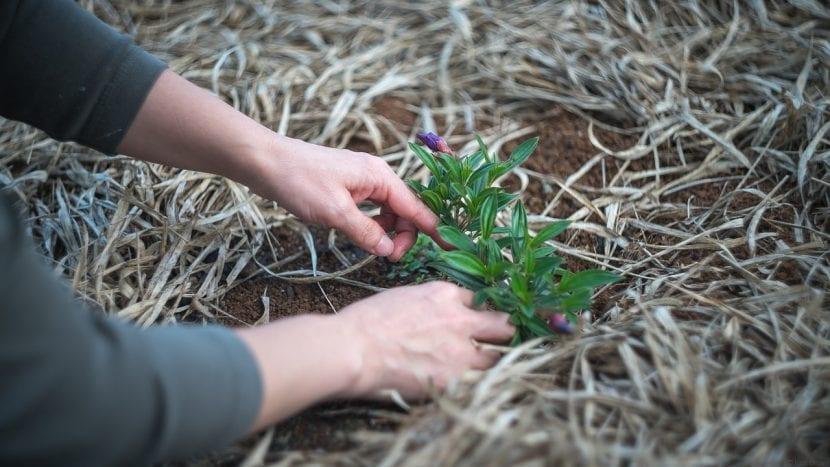 Persona cuidando de una planta
