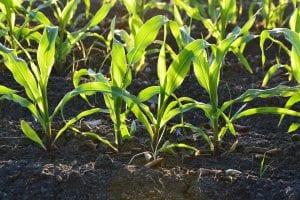 Plantas creciendo en un huerto