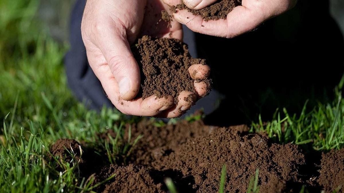 Hay varias razones por las que la tierra es importante para las plantas