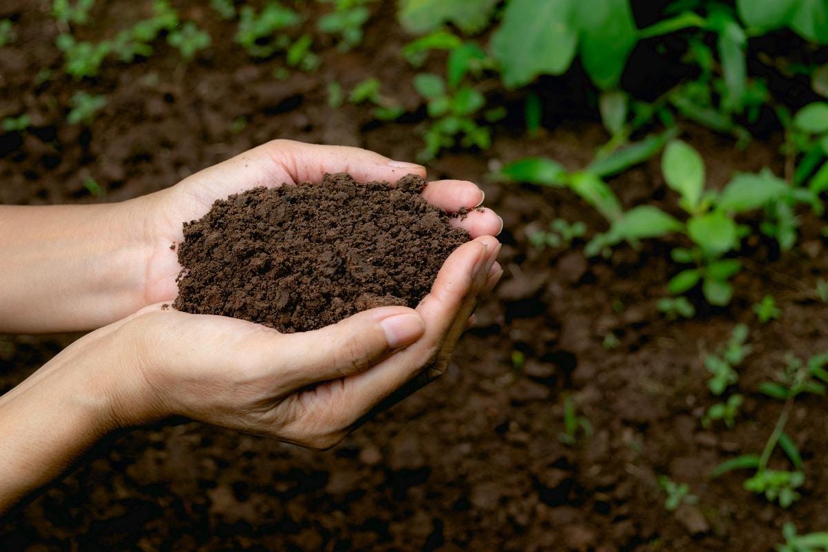 La tierra es importante para las plantas