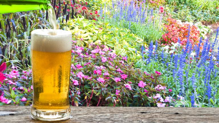 La cerveza atrae a las mariposas