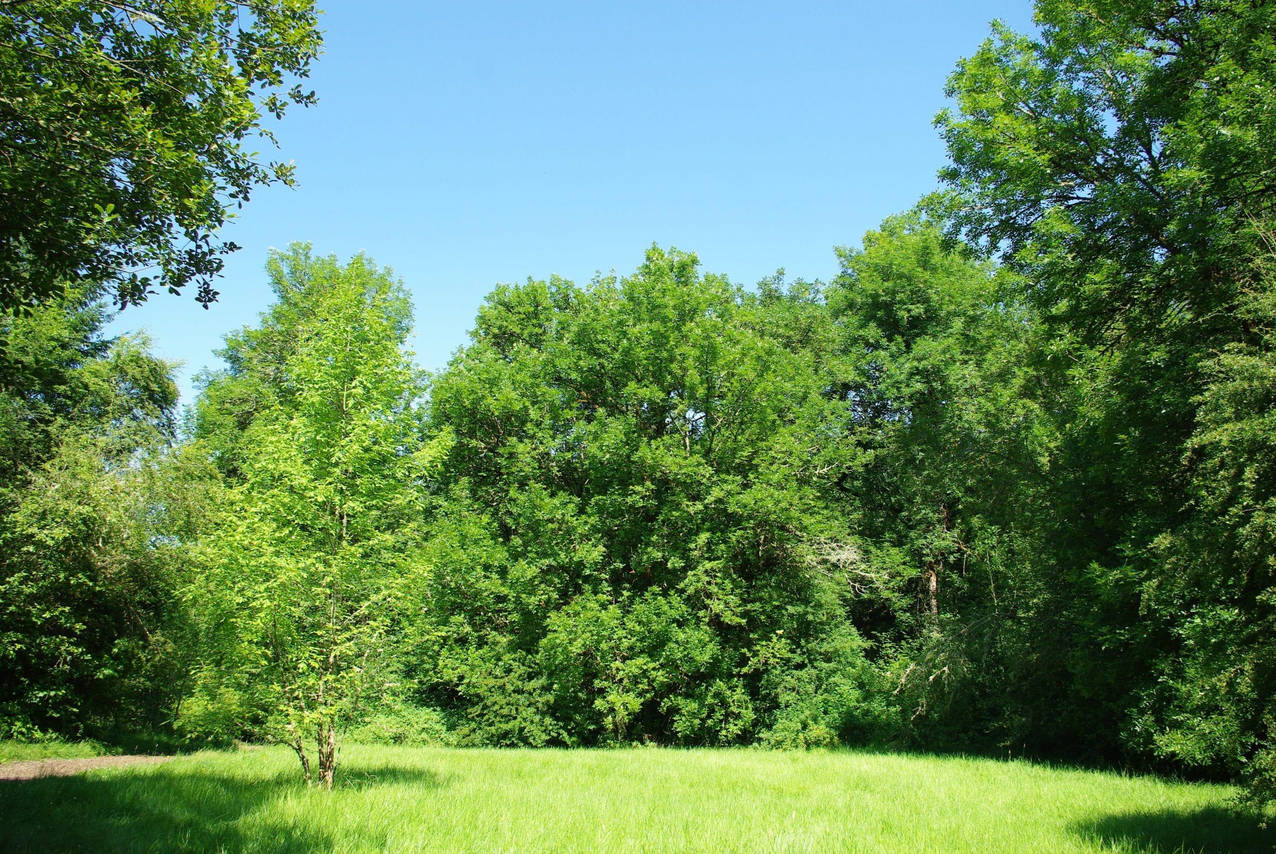 Árboles en un parque