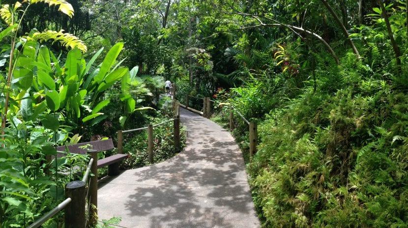 Camino en un jardín tropical