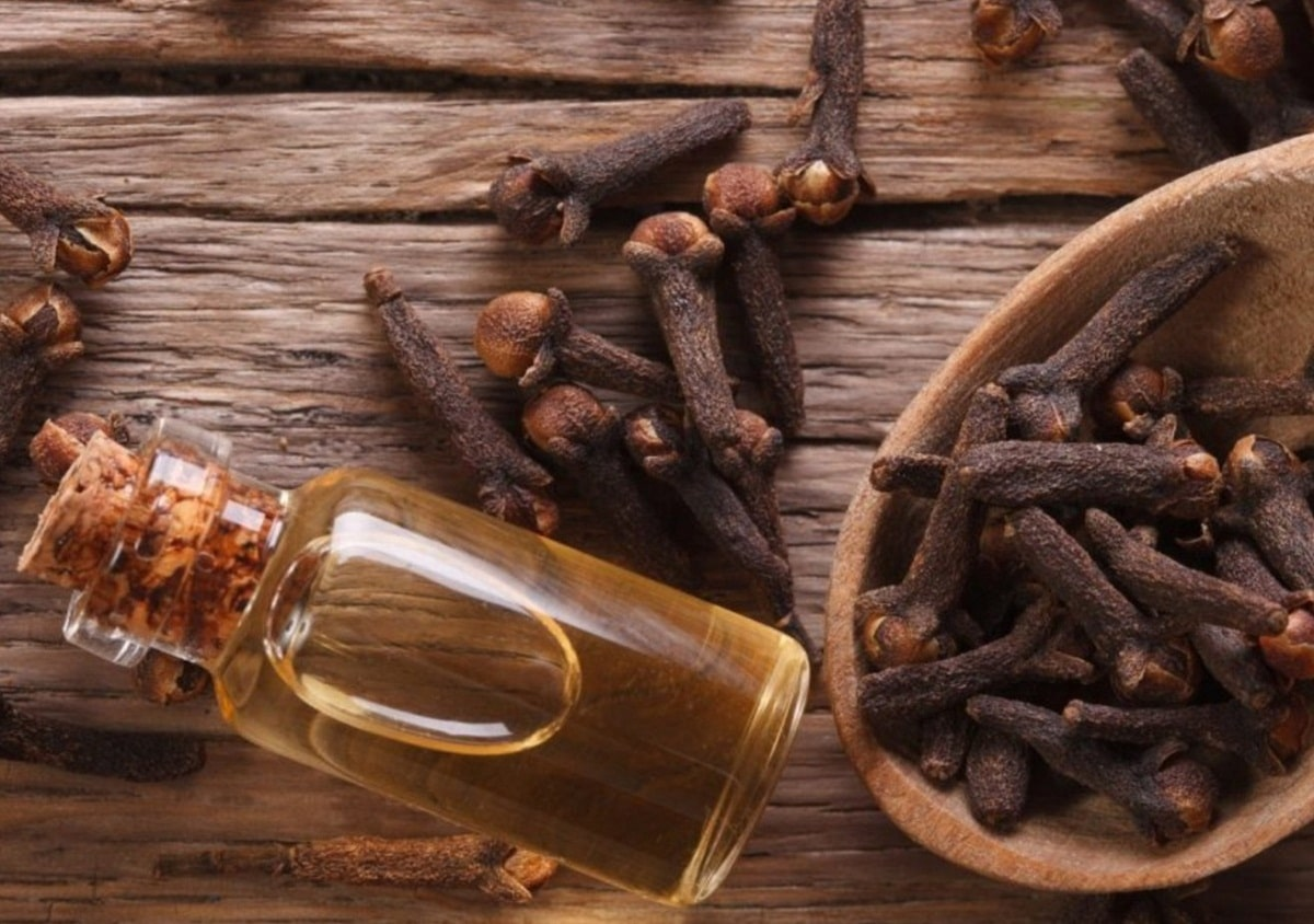 El clavo de olor se usa como ornamental y medicinal