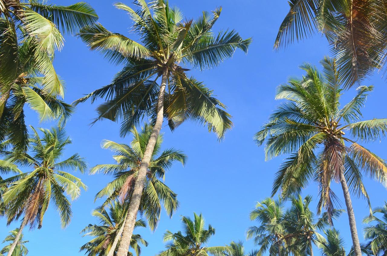 Las palmeras son hierbas gigantes