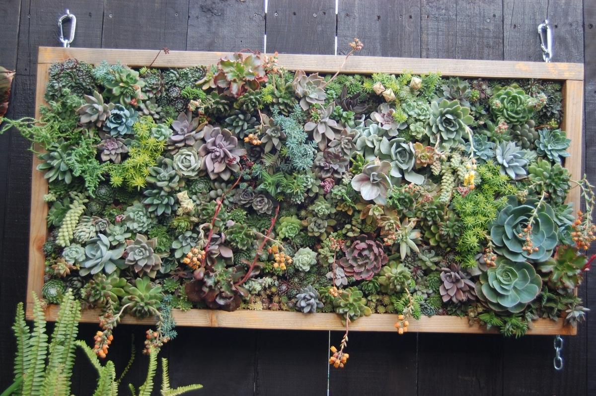 Un jardín vertical con plantas crasas crece bien en interior